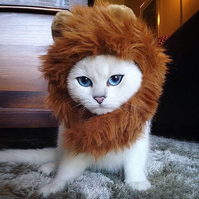 Coby the Internet Sensation dressed like Lion King