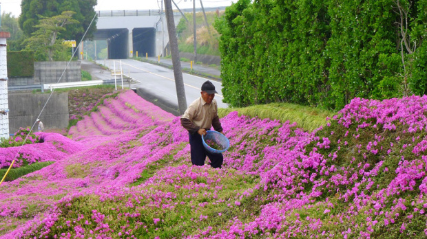 Man planting Flowers