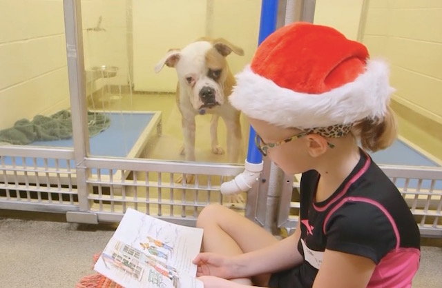 Something Beautiful Is Happening At This Animal Shelter in St Louis