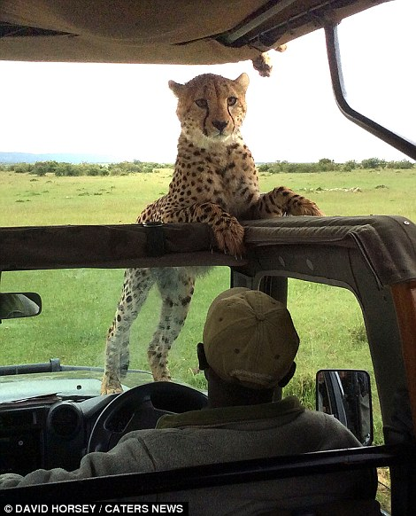 Scary moments in the safari