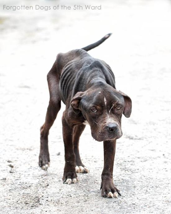 Stray Dog 3