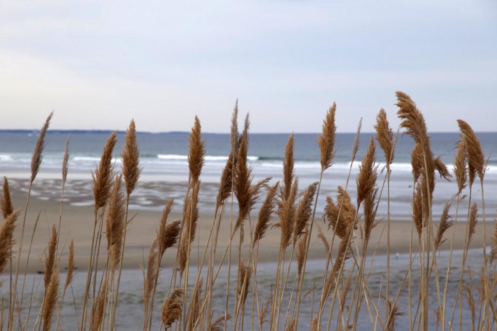 Beach Via Free Nature Stock