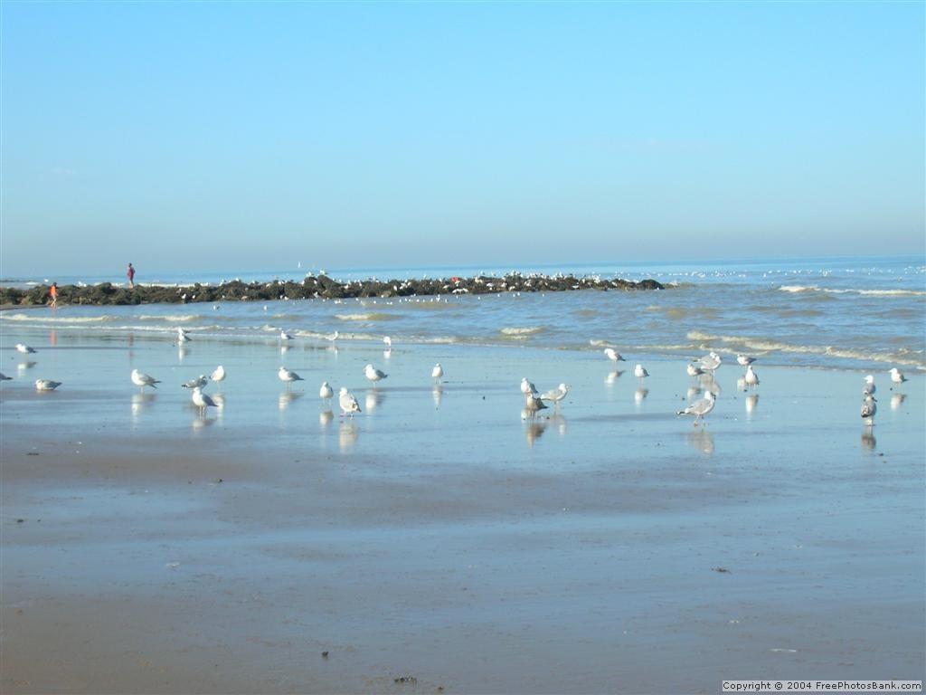 Beach Via Free Photos Bank