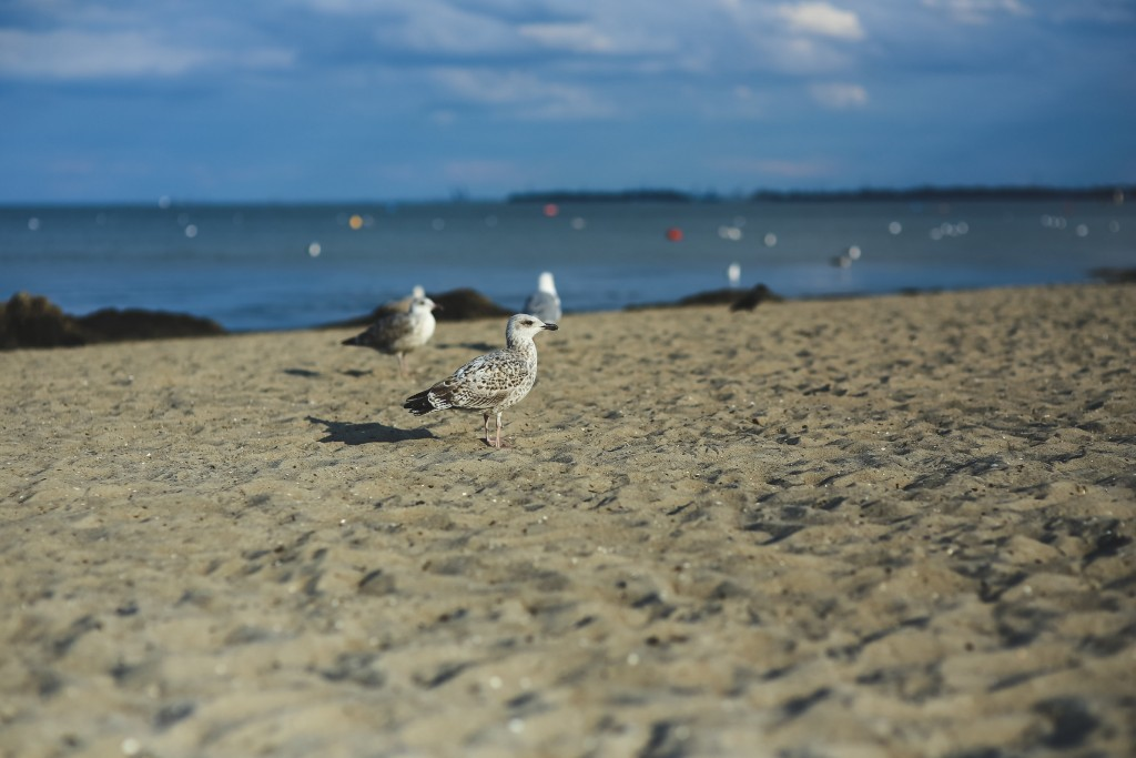 Seagull on a sandy shore Via kaboompics