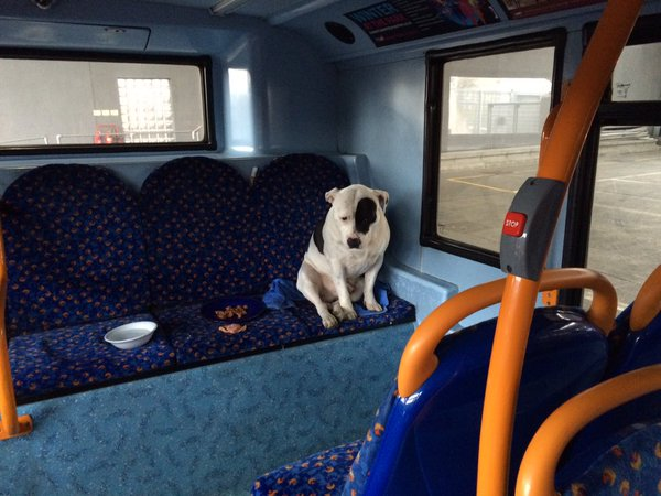 Buster On Bus