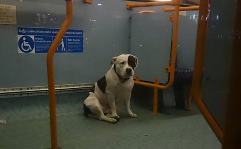 Dog Left on bus