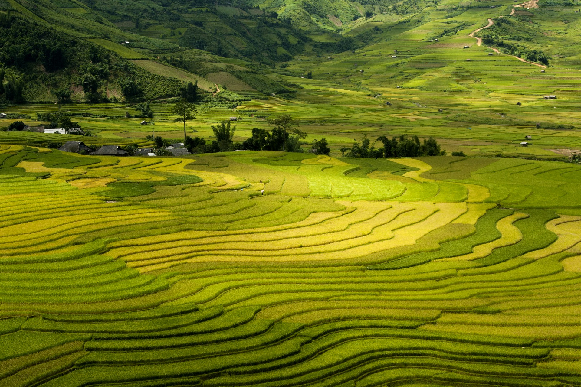 Sapa Rice Fields, Vietnam