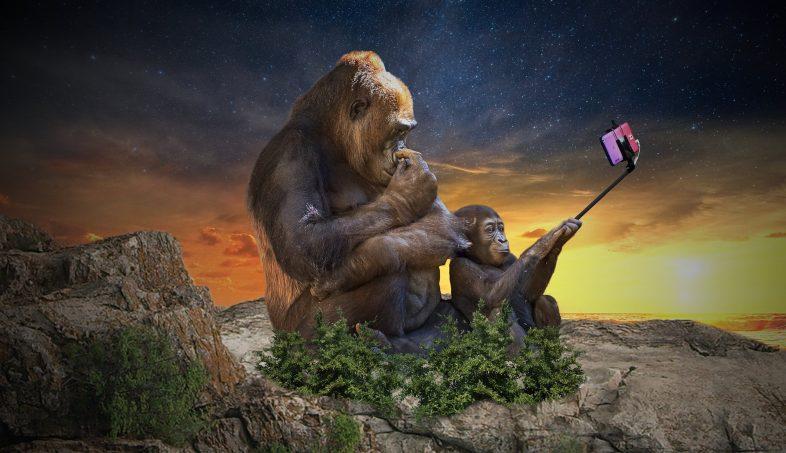 Evolution Selfie - Debongo