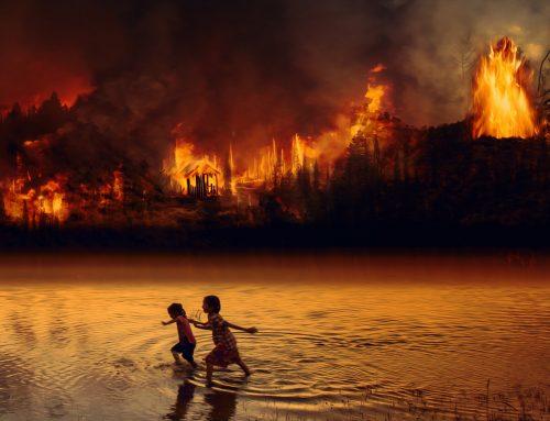Why More Than 20 Percent Oxygen Provider Habitat Amazon Went Ablaze?