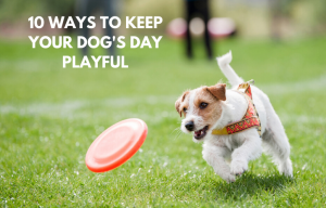 10 ways to keep your dog's day playful by Debongo
