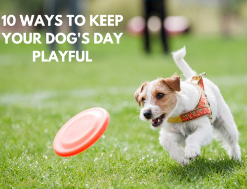 10 Ways To Keep Your Dog's Day Playful!