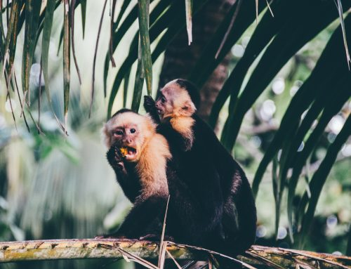Best Spots To Visit in Costa Rica