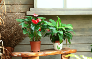 Planters-and-pots
