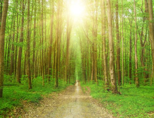 Planting Trees The Right Way To Sustain The Environment