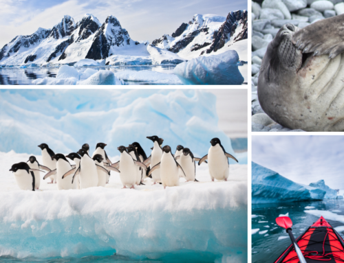 Insane Facts About Antarctica