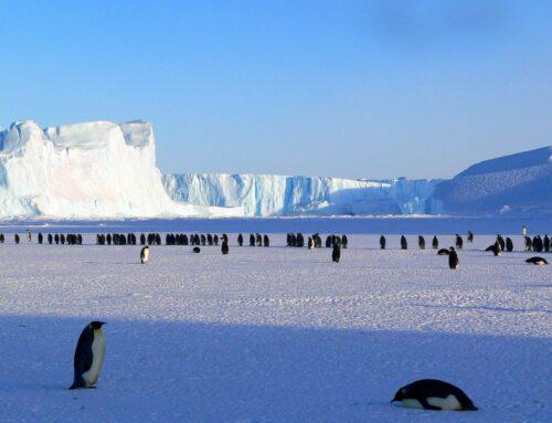 Antarctica: The Basics
