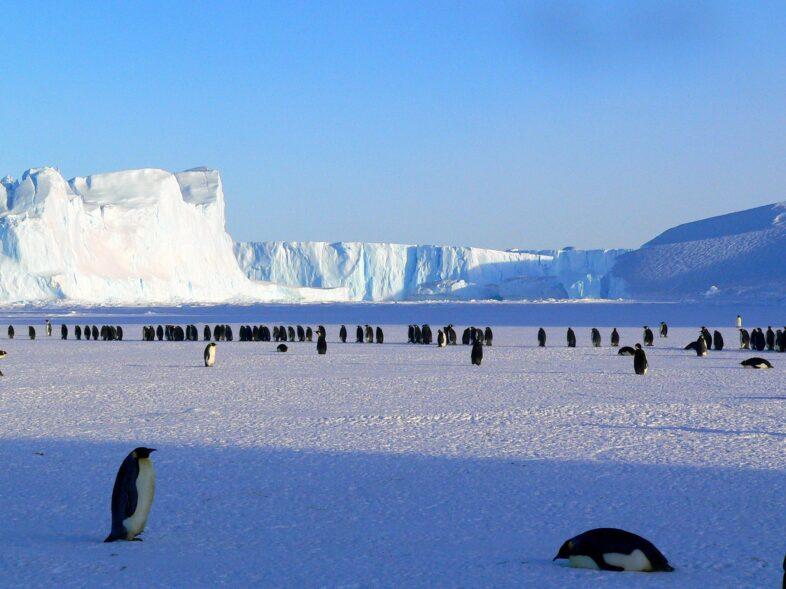 antarctica land